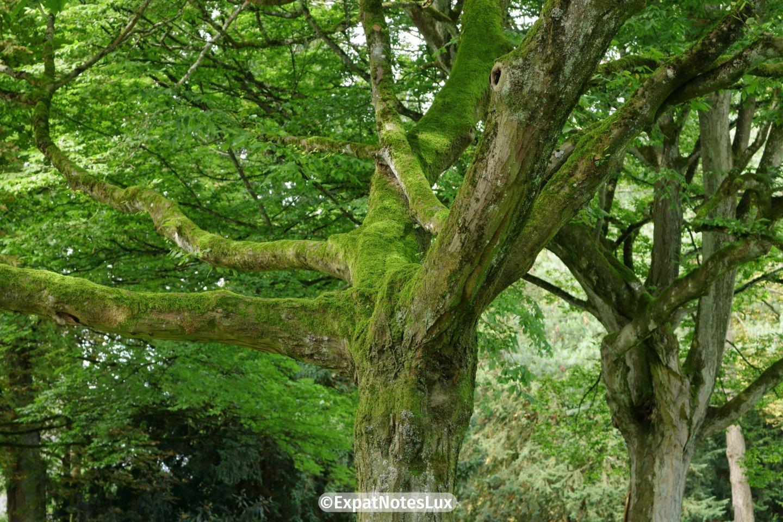 A tree in the parc de ville